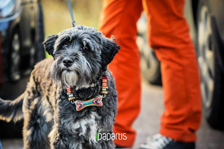 dog bone collar